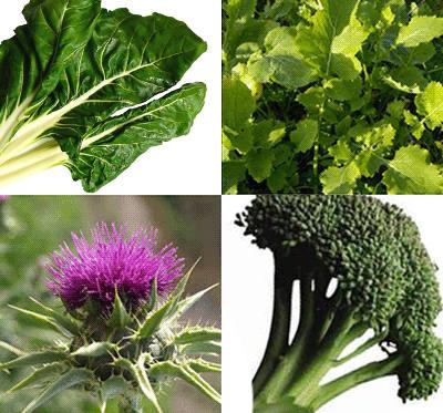 Les algues, les navets-asperges, les cardons et les brocolis sont des sources végétales de calcium