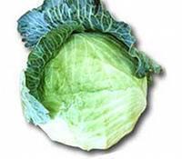 Chou, aliment d'origine végétale riche en calcium
