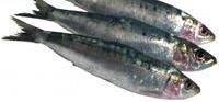 Les sardines, aliment contenant calcium